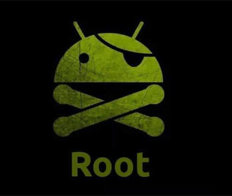 king Root